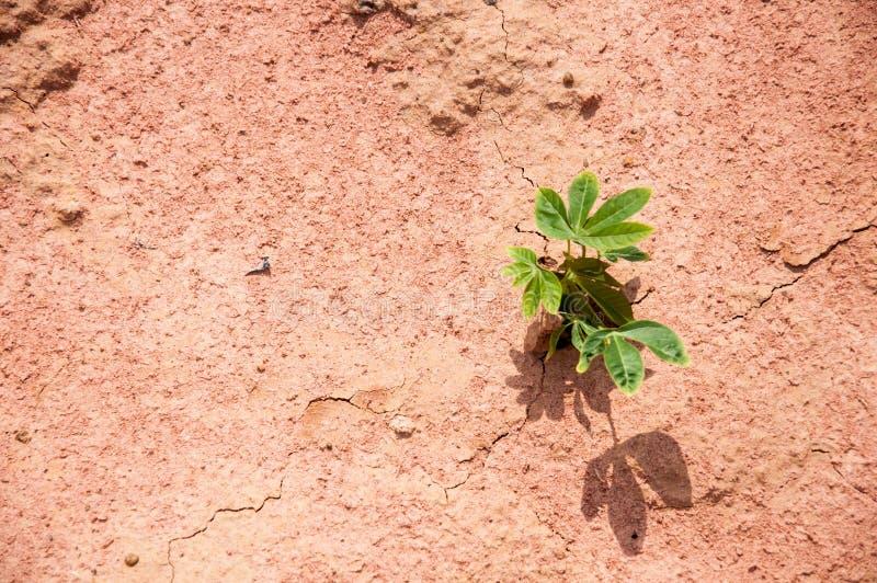 Λίγο δέντρο στο ξηρό έδαφος στοκ φωτογραφία με δικαίωμα ελεύθερης χρήσης