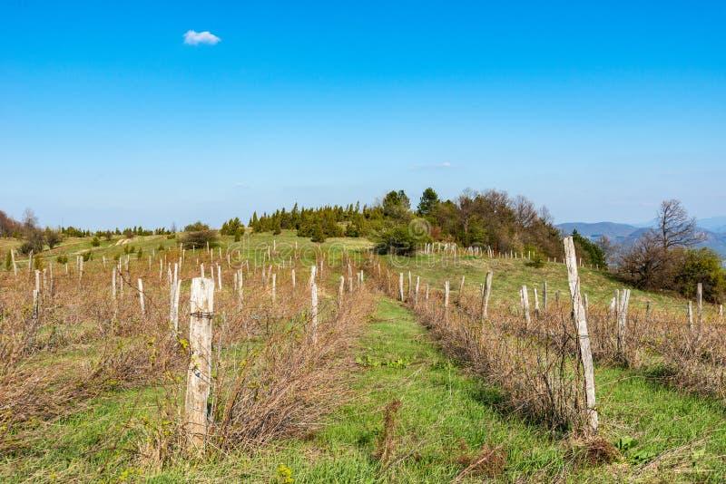Λίγο αγρόκτημα σμέουρων γραμμών Φυτεία σμέουρων στη Σερβία στοκ εικόνα με δικαίωμα ελεύθερης χρήσης