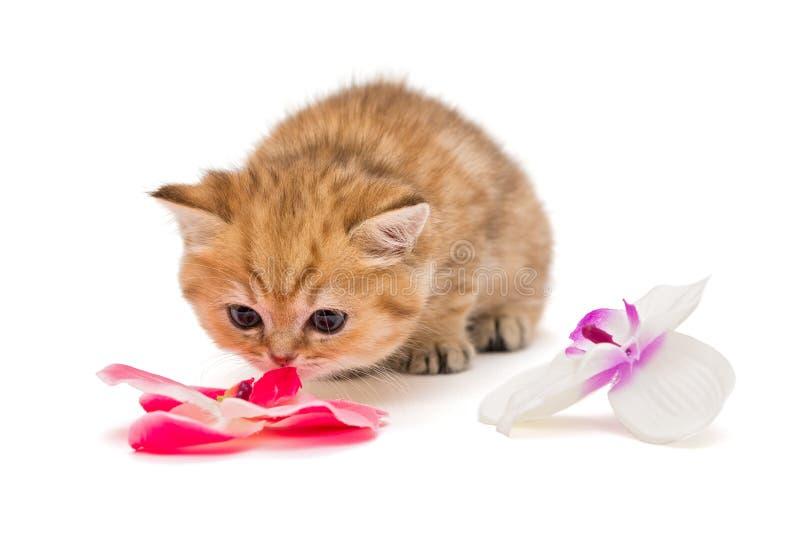 Λίγο γατάκι και ένα λουλούδι στοκ φωτογραφίες