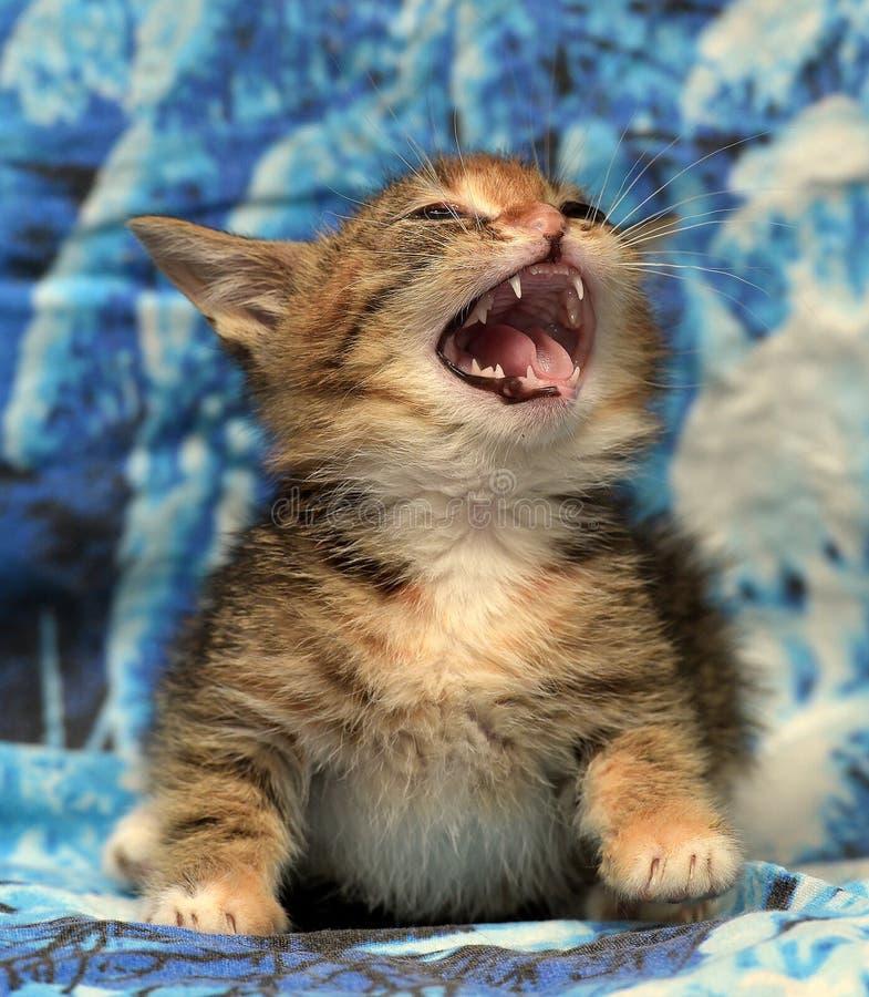 Λίγο γατάκι και hissing στοκ φωτογραφία με δικαίωμα ελεύθερης χρήσης