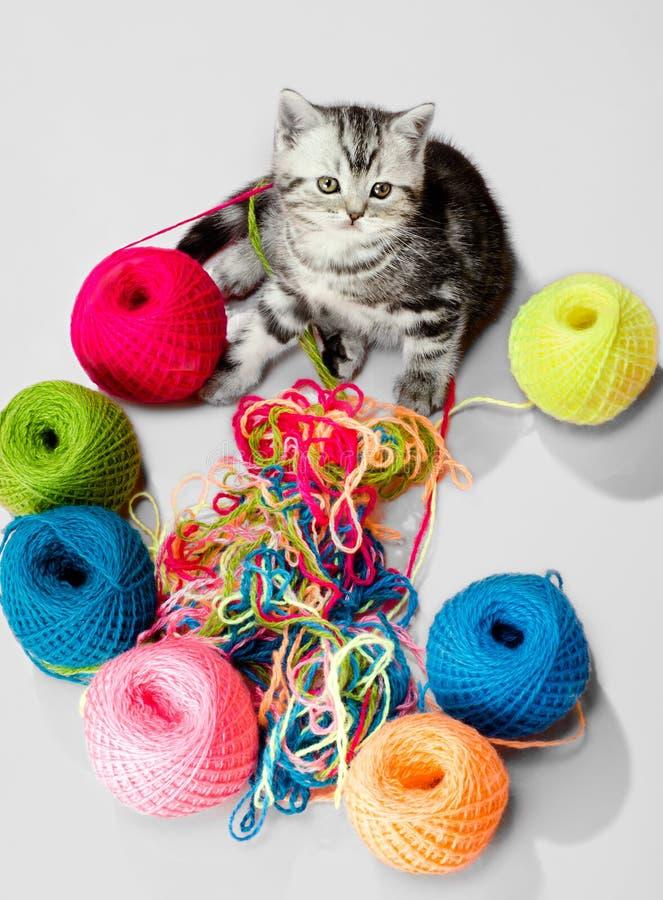 Λίγο γατάκι με πολλούς πολύχρωμο κουβάρι στοκ φωτογραφία με δικαίωμα ελεύθερης χρήσης