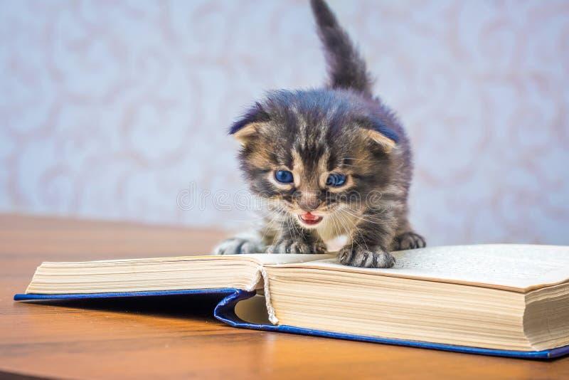 Λίγο γατάκι με τα μπλε μάτια κοντά σε ένα ανοικτό βιβλίο Ανάγνωση Classica στοκ εικόνα