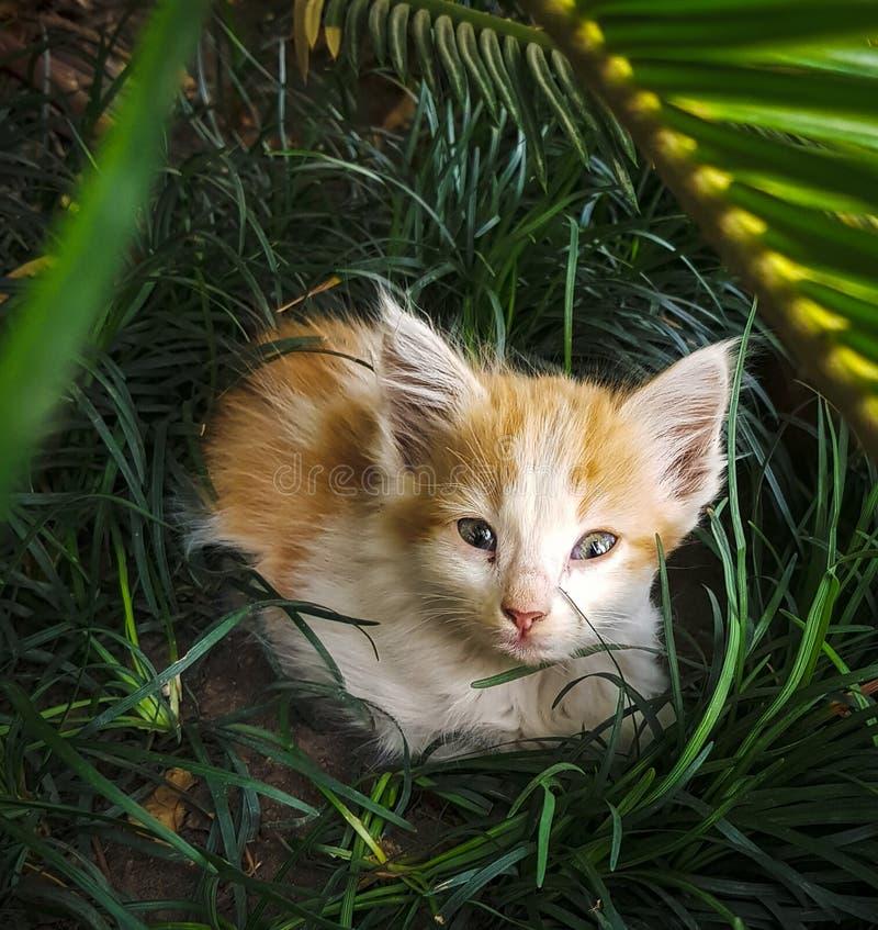 Λίγο γατάκι που κρύβει στη χλόη, στον κήπο στο εσωτερικό στοκ φωτογραφίες με δικαίωμα ελεύθερης χρήσης
