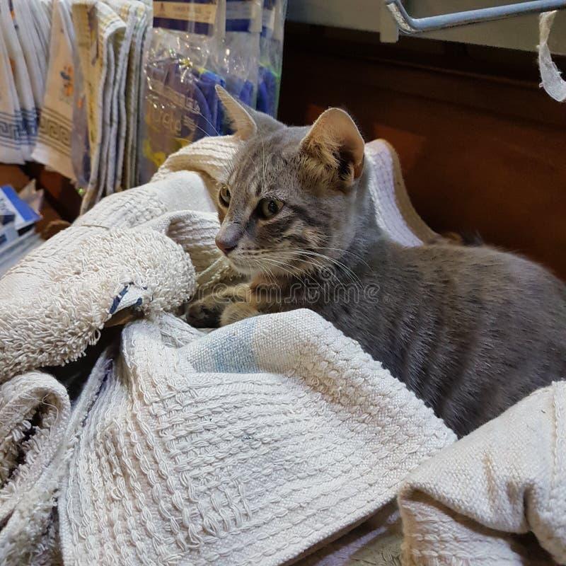 Λίγο γατάκι σε Chania στοκ εικόνες