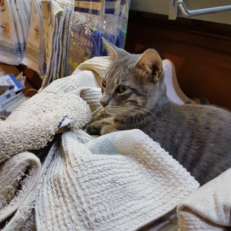 Λίγο γατάκι σε Chania στοκ εικόνα