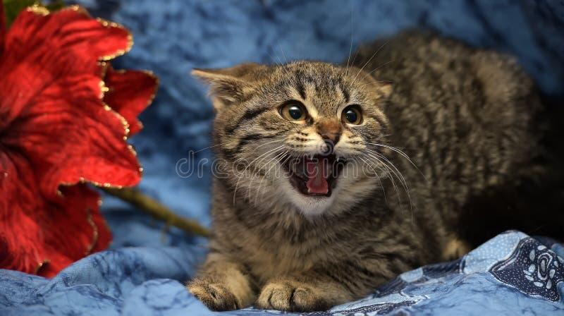 Λίγο γατάκι συρίζει στοκ εικόνα