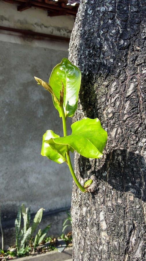 λίγο δέντρο στοκ φωτογραφίες με δικαίωμα ελεύθερης χρήσης