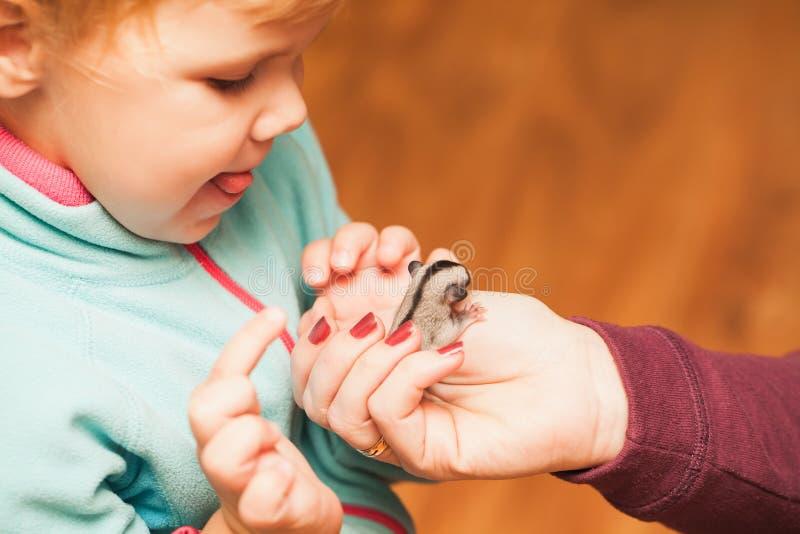 Λίγο κοριτσάκι που παίζει με cub ανεμοπλάνων ζάχαρης στοκ φωτογραφίες με δικαίωμα ελεύθερης χρήσης