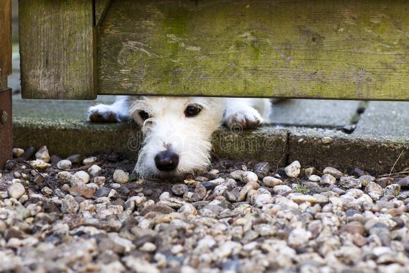 Λίγο λυπημένο σκυλί στοκ εικόνα με δικαίωμα ελεύθερης χρήσης