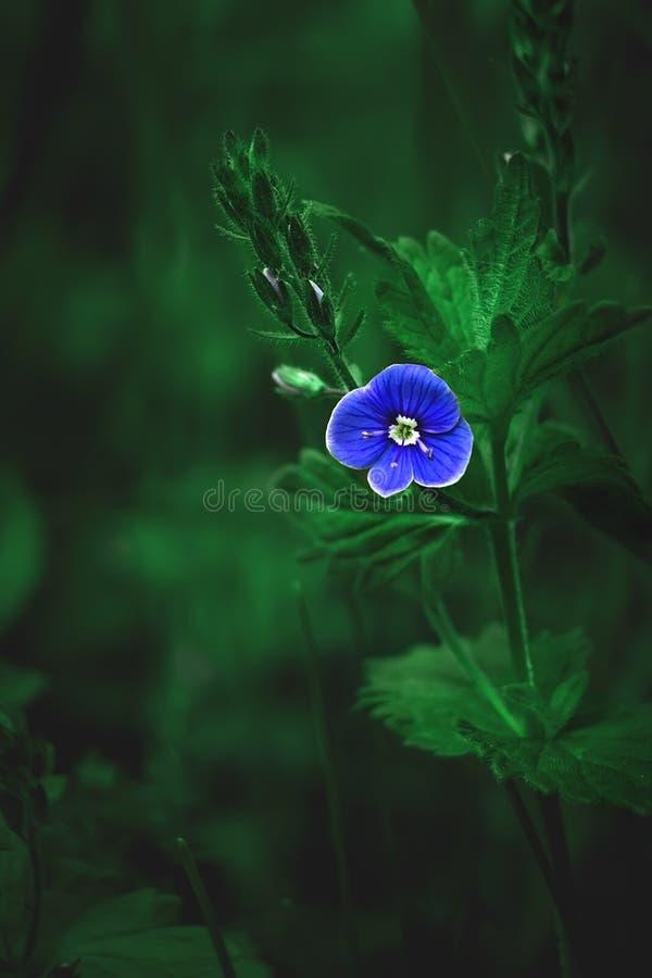Λίγο μπλε λουλούδι σε ένα πράσινο υπόβαθρο στοκ φωτογραφίες