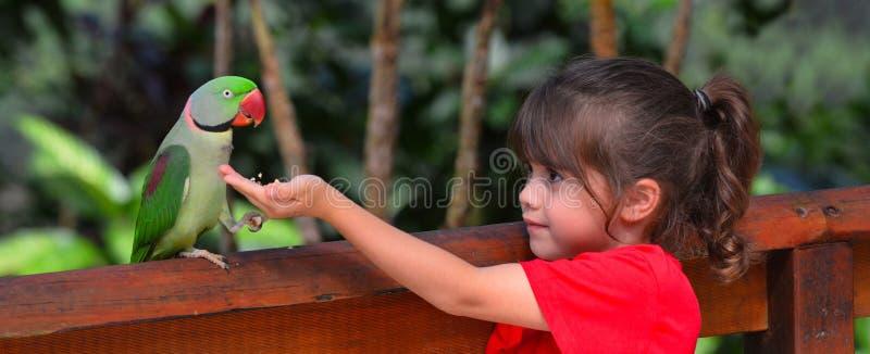 Λίγο παιδί ταΐζει έναν παπαγάλο Alexandrine στοκ φωτογραφίες
