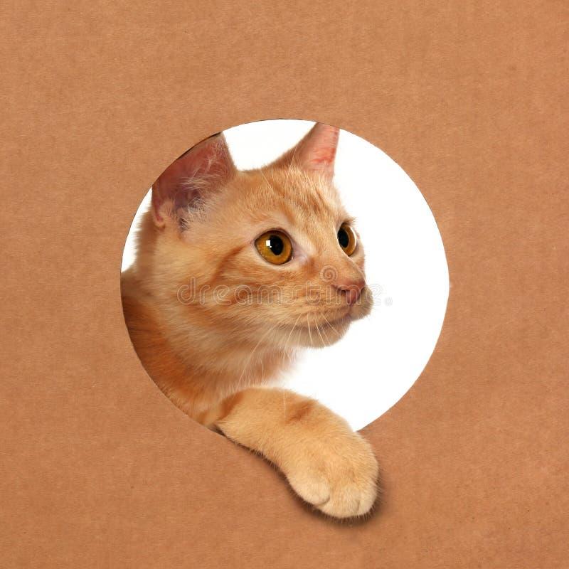 Λίγο πορτοκαλί τιγρέ παιχνίδι γατακιών σε ένα κουτί από χαρτόνι στοκ εικόνες