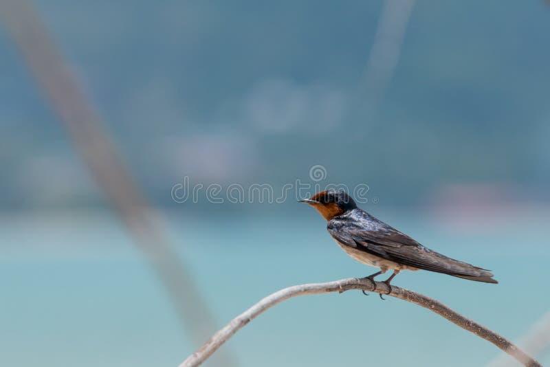 Λίγο πουλί στον κλάδο στοκ εικόνα με δικαίωμα ελεύθερης χρήσης