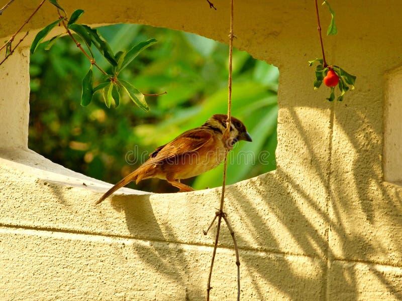 Λίγο πουλί στοκ εικόνα