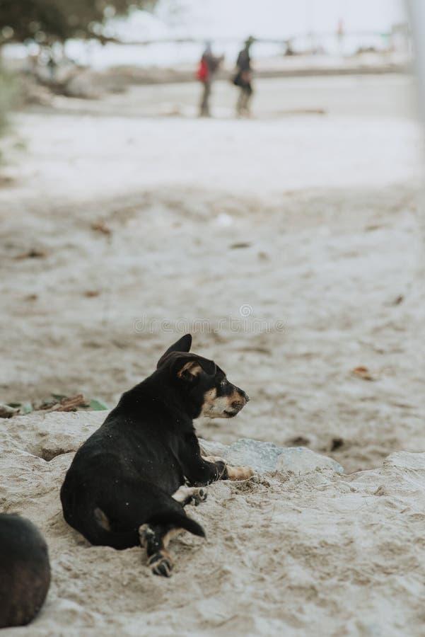 Λίγο σκυλί που βρίσκεται στην άμμο στοκ εικόνα με δικαίωμα ελεύθερης χρήσης