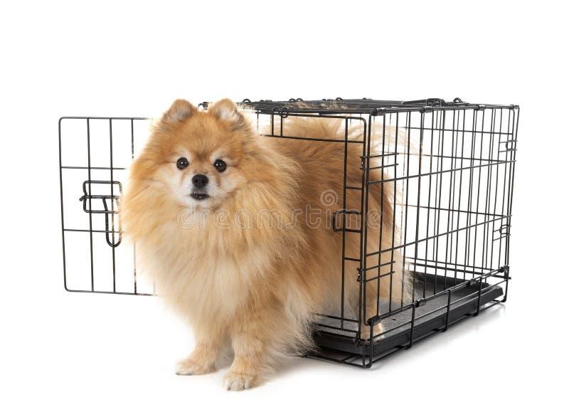 Λίγο σκυλί στο κλουβί στοκ φωτογραφίες