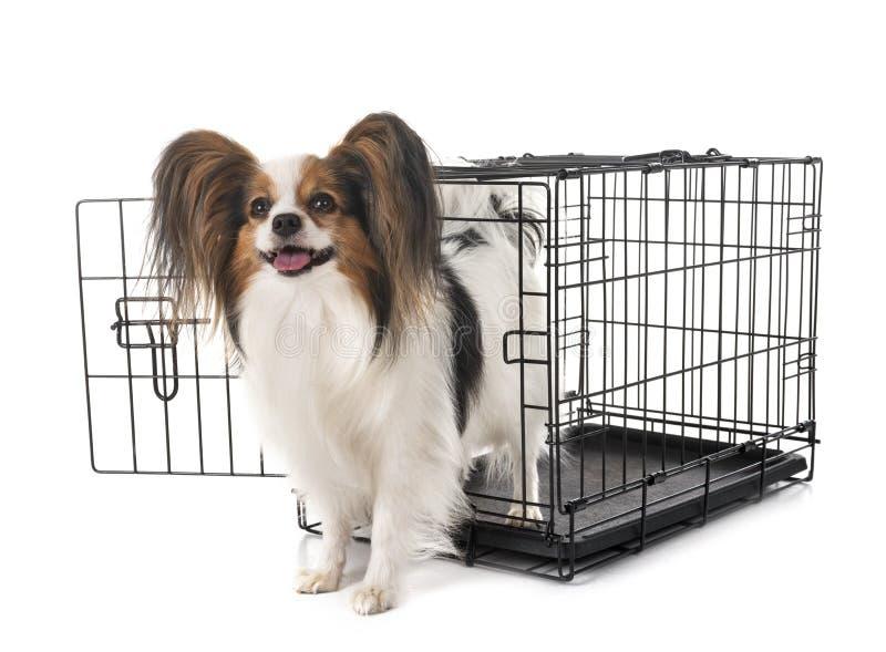 Λίγο σκυλί στο κλουβί στοκ φωτογραφία με δικαίωμα ελεύθερης χρήσης