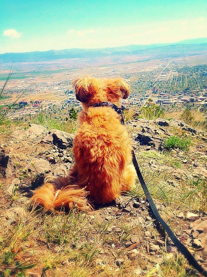 Λίγο σκυλί πάνω από ένα βουνό στοκ φωτογραφία με δικαίωμα ελεύθερης χρήσης