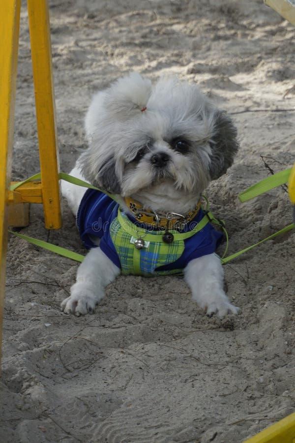 Λίγο σκυλί στην άμμο στοκ φωτογραφίες