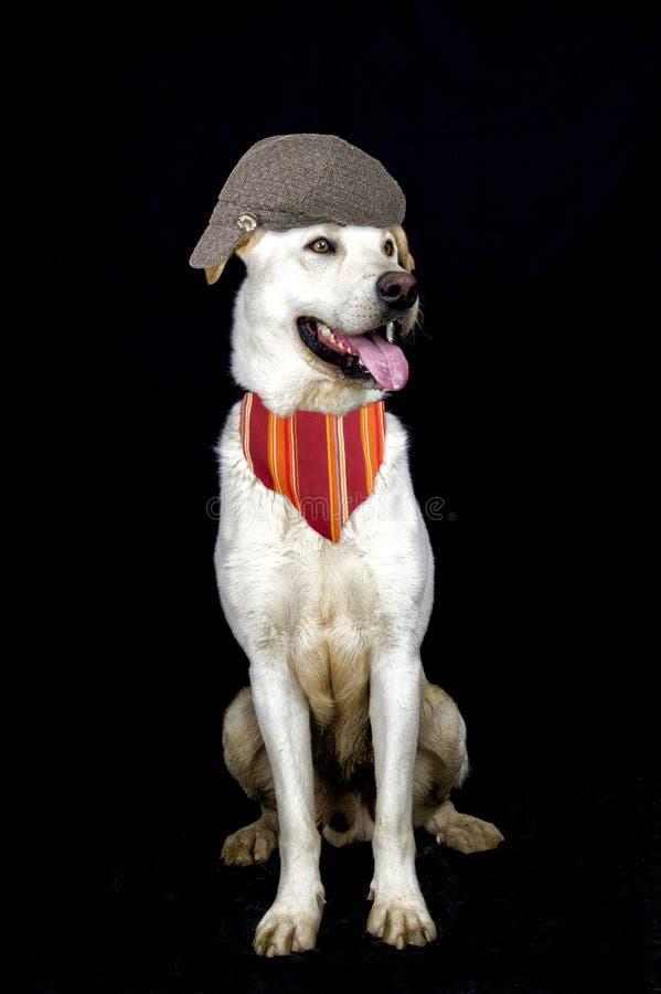 Λίγο σκυλί pintor στοκ φωτογραφίες