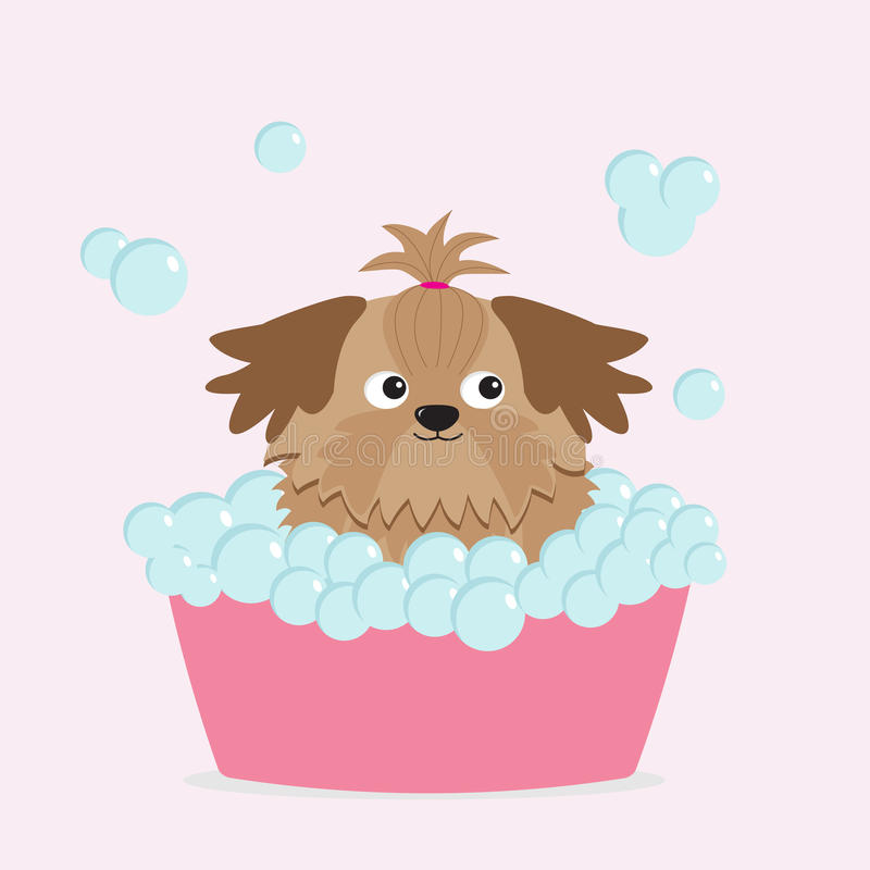 Λίγο σκυλί Shih Tzu μαυρίσματος γοητείας που παίρνει μια φυσαλίδα ελεύθερη απεικόνιση δικαιώματος
