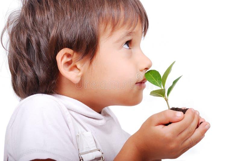 Λίγο χαριτωμένο παιδί που κρατά το πράσινο φυτό στοκ εικόνα