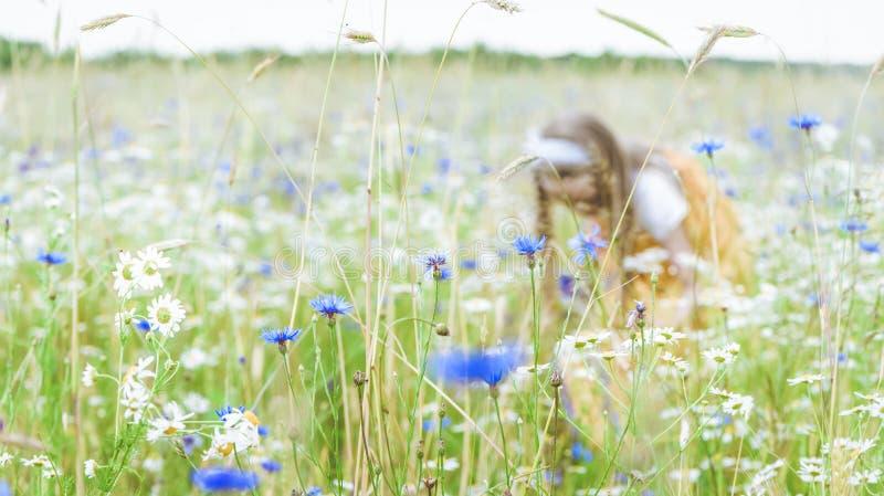 Λίγο όμορφο κορίτσι στην κίτρινη ρωσική επιλογή φορεμάτων ανθίζει στον τομέα των άγριων λουλουδιών τη θερινή ημέρα στοκ εικόνα με δικαίωμα ελεύθερης χρήσης