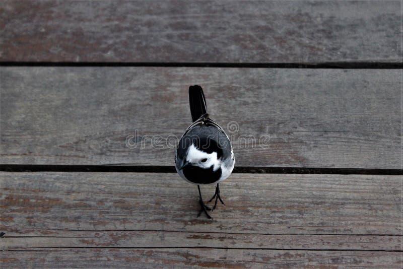 Λίγο όμορφο πουλί που στέκεται στους ξύλινους πίνακες στοκ φωτογραφίες