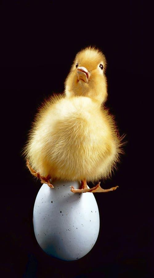 Λίγο Ducky στοκ φωτογραφίες με δικαίωμα ελεύθερης χρήσης