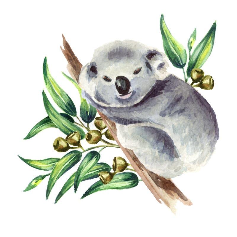 Λίγο Koala αφορά τον κλάδο ευκαλύπτων, που απομονώνεται στο άσπρο υπόβαθρο Συρμένη χέρι απεικόνιση Watercolor ελεύθερη απεικόνιση δικαιώματος