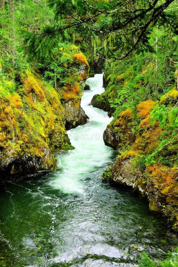 Λίγο Qualicum πέφτει επαρχιακό πάρκο, Νησί Βανκούβερ, Καναδάς στοκ εικόνες