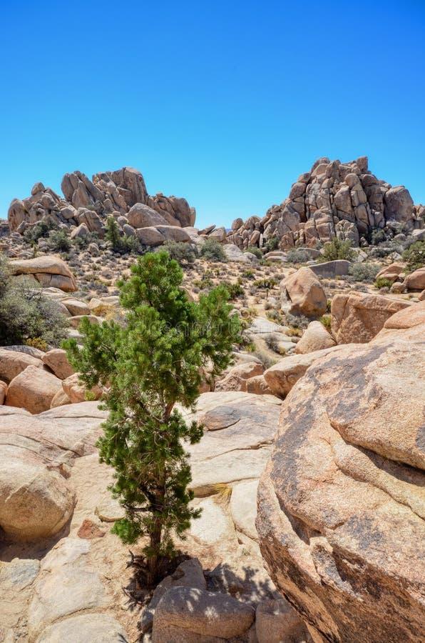 Λίθοι και ένα δέντρο στο εθνικό πάρκο δέντρων του Joshua στοκ φωτογραφίες με δικαίωμα ελεύθερης χρήσης