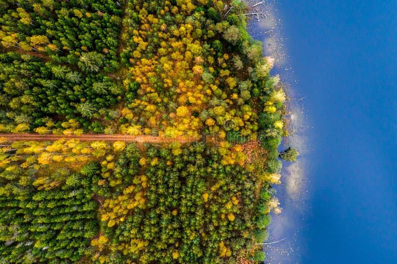 Λίμνες κατά τη δασική, τοπ άποψη στοκ εικόνες