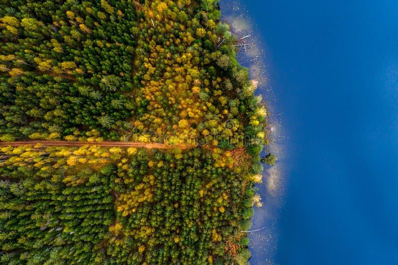 Λίμνες κατά τη δασική, τοπ άποψη στοκ εικόνα με δικαίωμα ελεύθερης χρήσης