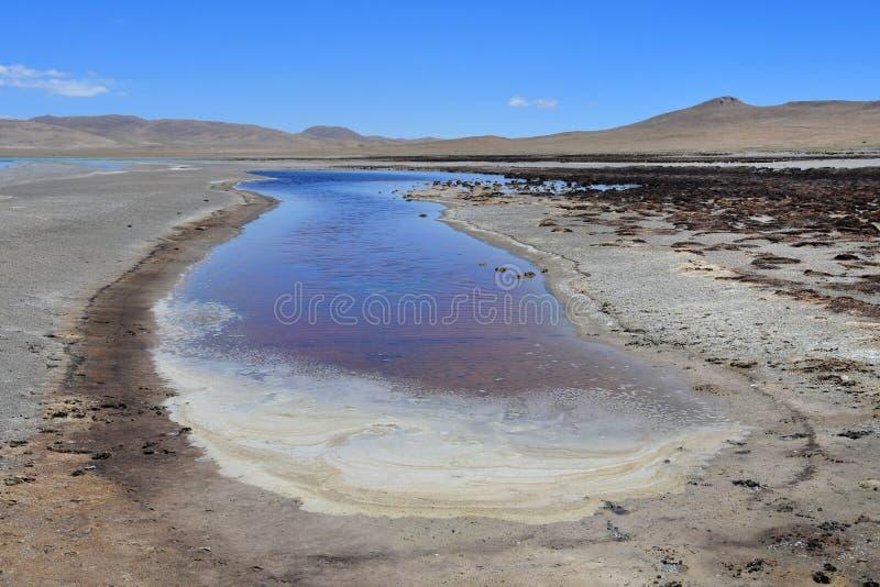 Λίμνες του Θιβέτ Το κατάστημα της λίμνης του κοβαλτίου του Sam το καλοκαίρι στο σαφή καιρό στοκ φωτογραφίες με δικαίωμα ελεύθερης χρήσης
