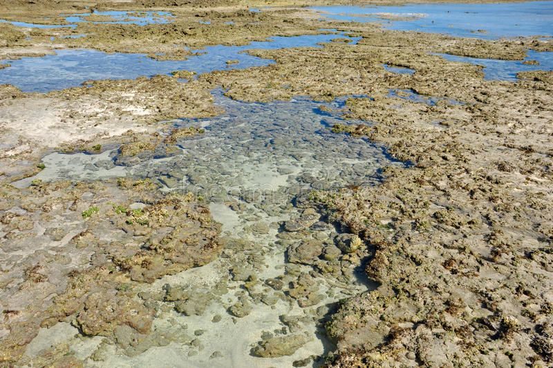 Λίμνες του maragogi στοκ εικόνες με δικαίωμα ελεύθερης χρήσης