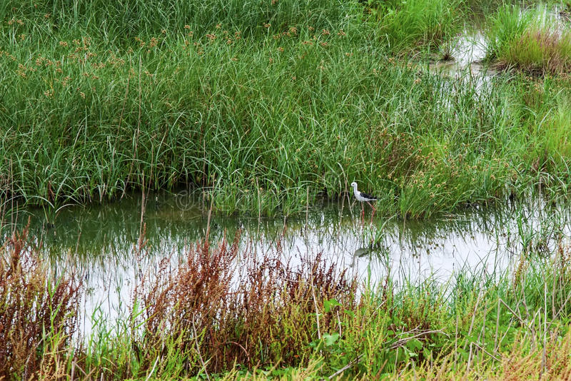 Λίμνες στοκ φωτογραφίες με δικαίωμα ελεύθερης χρήσης