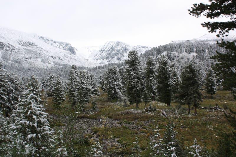 Λίμνες Karakol, altai βουνών Repablic στοκ εικόνα με δικαίωμα ελεύθερης χρήσης