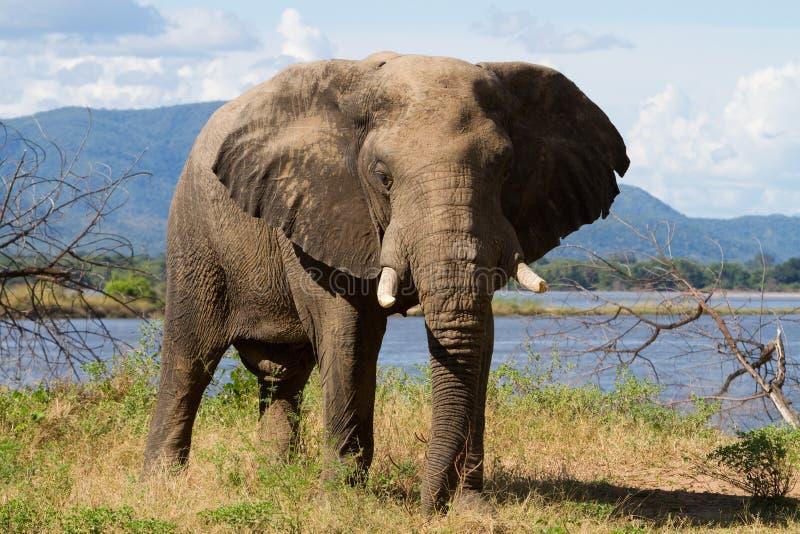 λίμνες mana ελεφάντων στοκ εικόνες