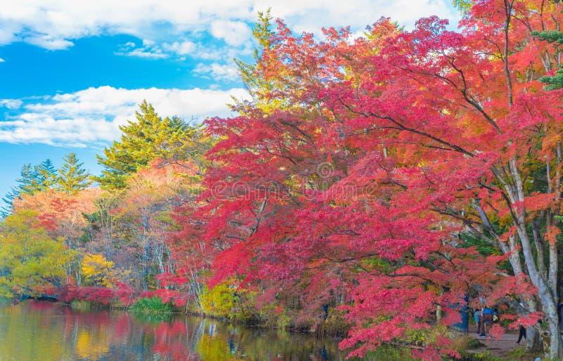 Λίμνη ένα ευχάριστο φθινόπωρο στοκ εικόνες με δικαίωμα ελεύθερης χρήσης