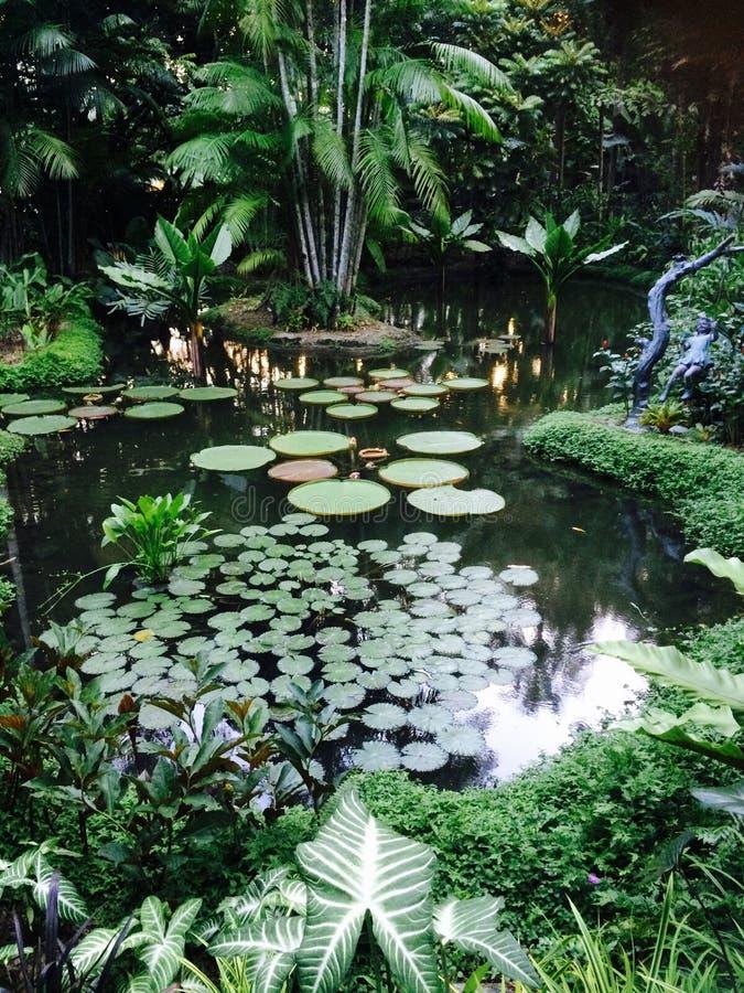 Λίμνη βοτανικών κήπων στοκ εικόνες