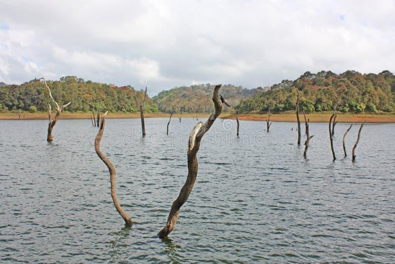 Λίμνη, εθνικό πάρκο Periyar στοκ φωτογραφίες