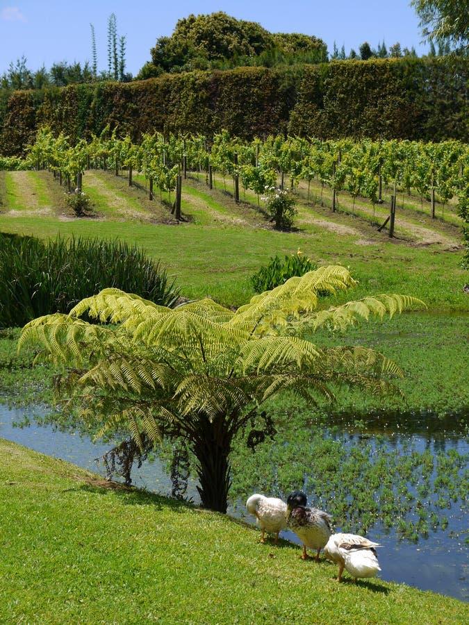 λίμνη κήπων παπιών υποτροπι&kapp στοκ εικόνα με δικαίωμα ελεύθερης χρήσης