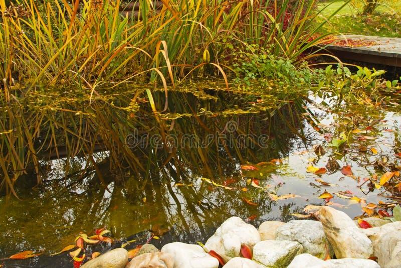 Λίμνη κήπων φθινοπώρου στοκ φωτογραφία