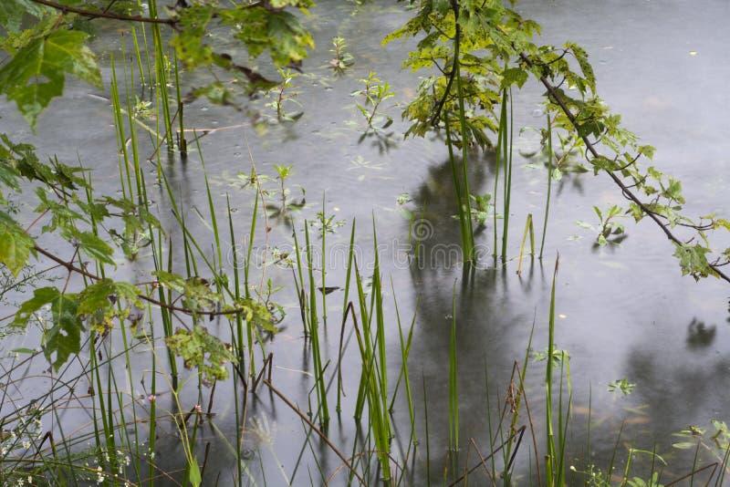 Λίμνη και φύλλα άκρων στοκ εικόνες με δικαίωμα ελεύθερης χρήσης