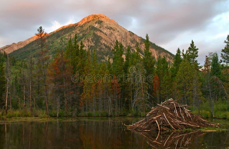 λίμνη καστόρων στοκ εικόνα με δικαίωμα ελεύθερης χρήσης