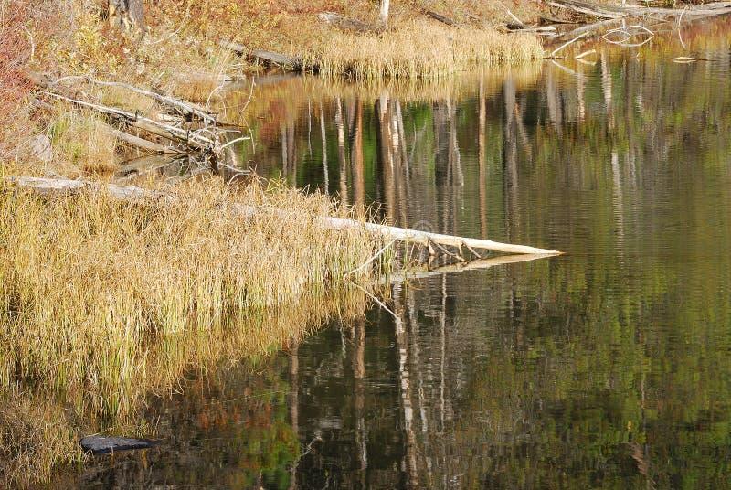 Λίμνη κολοβωμάτων στοκ εικόνα με δικαίωμα ελεύθερης χρήσης