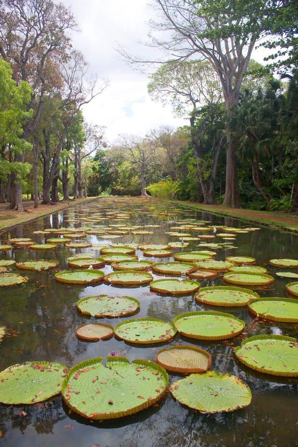 λίμνη κρίνων στοκ εικόνες με δικαίωμα ελεύθερης χρήσης