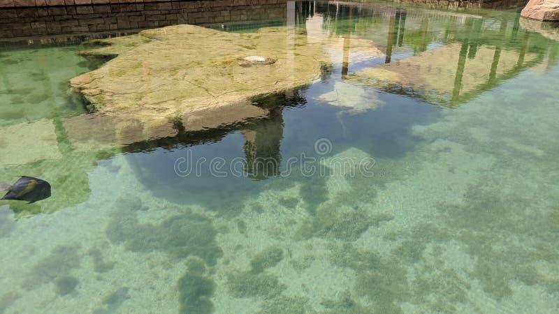 Λίμνη λιμνών ξενοδοχείων με τα ψάρια στοκ φωτογραφία με δικαίωμα ελεύθερης χρήσης