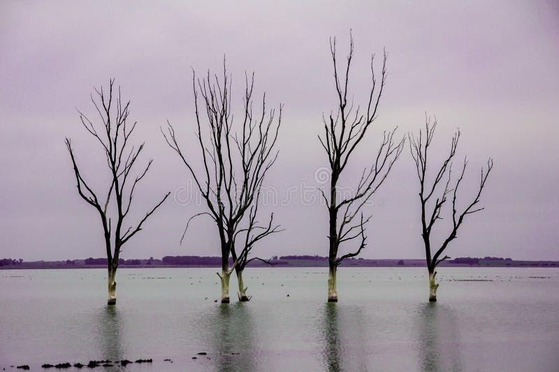 Λίμνη με τα δέντρα στοκ εικόνες